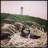 Poussins de Grand cormoran sur la colonie des Huguenans (cliché : Guillaume DEBOUT) []